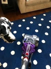 Wednesday Vacuum